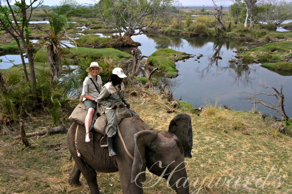 celia on an elephant haywards