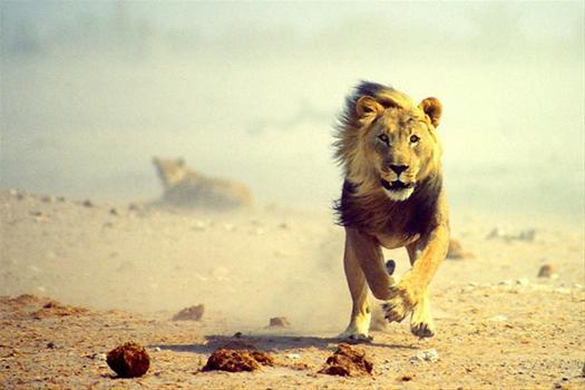 africa-travel-1.jpg